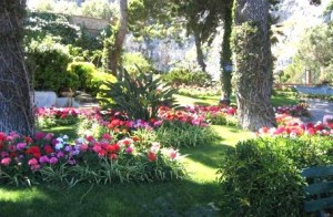 Giardininterazza